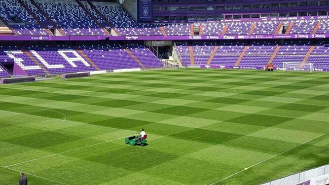 El césped del estadio del Valladolid, a examen